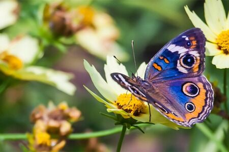Fountains and Pottery South Florida | Planting for Butterflies