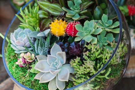 Cactus and Succulents for Sale | Growing Succulents