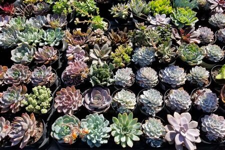 Zero-Scaping -Tips & Ideas for Drought Tolerant Gardens